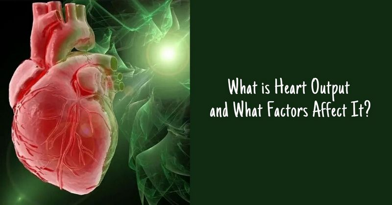 What is Heart Output and What Factors Affect It_